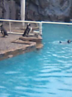 北脇、能登島水族館で熱唱…!? その3